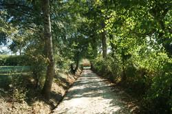 Walk to the village