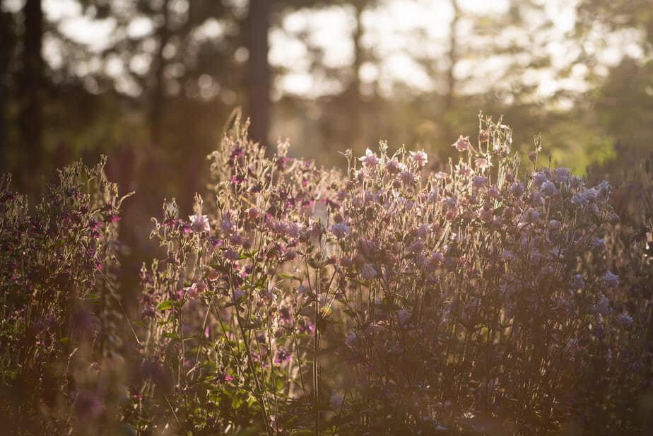 Plantes sauvages: botanique et bienfaits