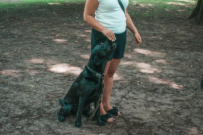 Hundehalterschule-Hamburg-Hundeschule-Hundetrainer-Junghunde