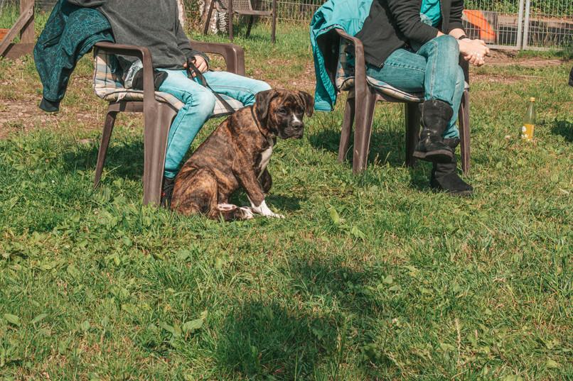 Hundehalterschule-Hamburg-Hundeschule-Hundetrainer-Welpen