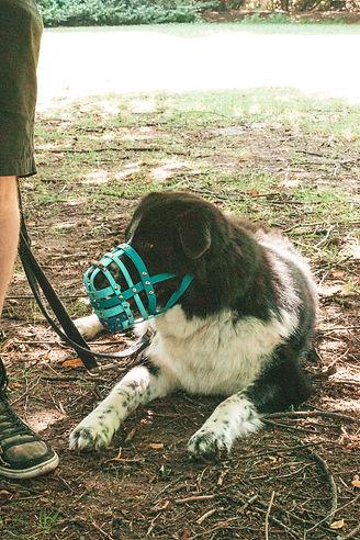 Hundehalterschule-Hamburg-Angsthund-Problemhunde-Hundeschule-Hundetrainer
