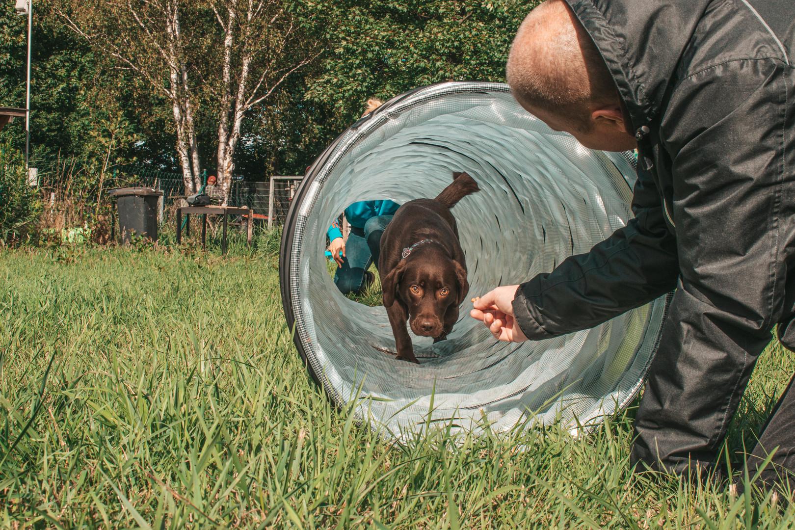 Hundehalterschule-Hamburg-Agility-Hundeschule-Hundetrainer