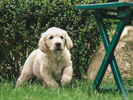 Hundeschule/ Welpenunterricht – ab wann ist das sinnvoll und warum?