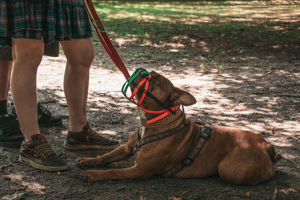 Hundehalterschule-Hamburg-Angsthunde-Problemhunde-Hundeschule-Hundetrainer