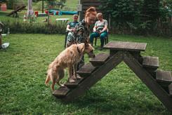 Hundehalterschule-Hamburg-Hundeschule-Hundetrainer