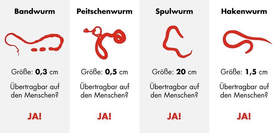 Heiland_Infografik_Wurmarten_20191115_mh