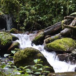 Stream conservation