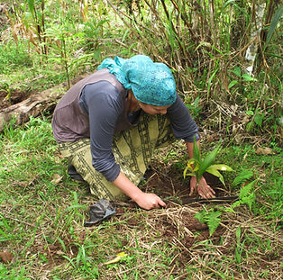 Reforestacion page.jpg