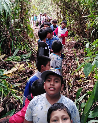 Escuela del bosque 2.jpg