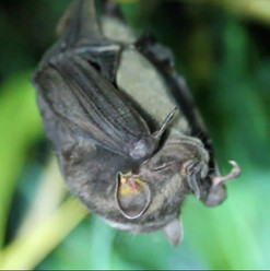 Proyecto murciélagos