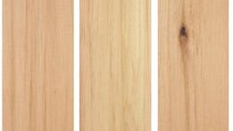 cedro rojo delpacifico