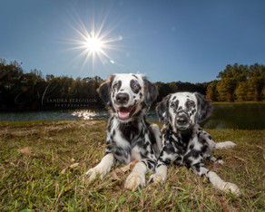 Things to ask your Pet Photographer - #2
