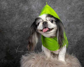 How to prepare your pet for a photo session.