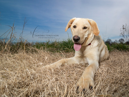 Things to Ask Your Pet Photographer, #4