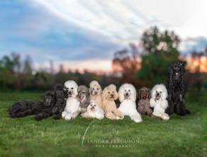 Hiring a Pet Photographer - #1