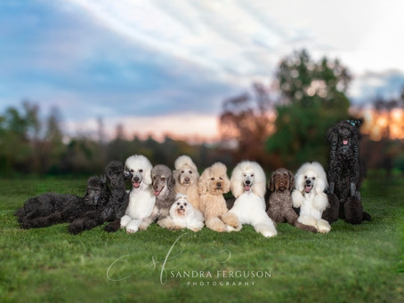 Hiring a Pet Photographer - #1