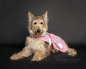 Things to Ask Your Pet Photographer, #7
