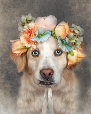 Things to Ask Your Pet Photographer, #9