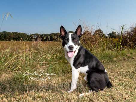 Things to Ask your Pet Photographer, #3
