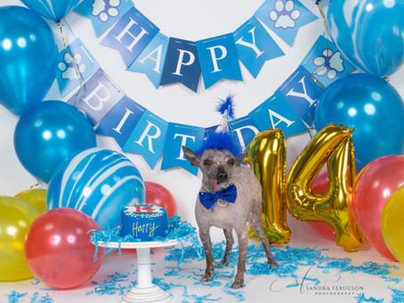 Birthday & Cake Smash