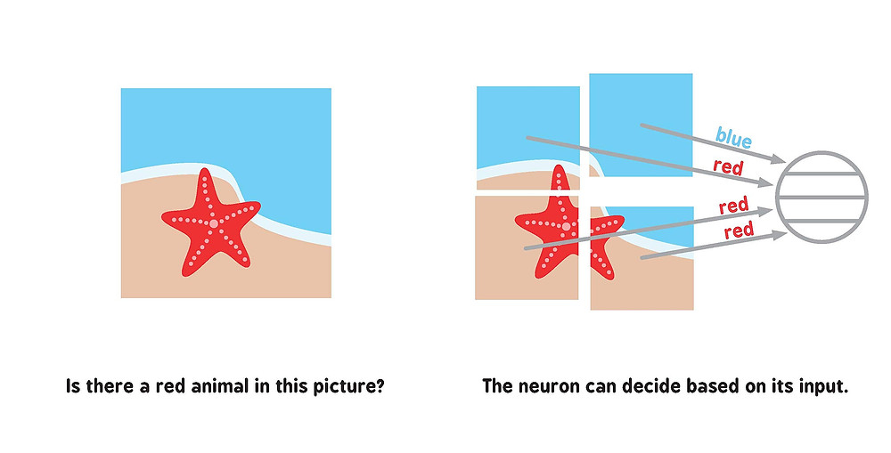 A page from Neural Networks for Babies, showing an illustrated red starfish, and how a neuron might detect it.