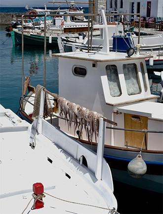blekksprut-po-båt.jpg