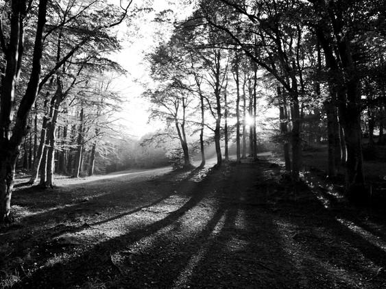 Il bosco di Santa Franca