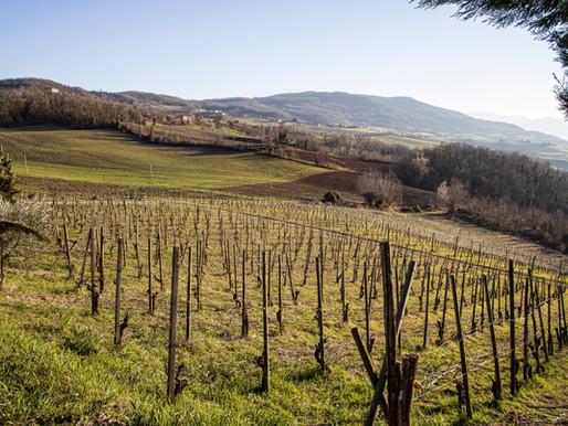 La Trebbiola: azienda agricola biologica tra le colline di Rivergaro