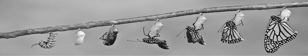 Entwicklung von der Raupe zum Schmetterling