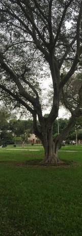 Parque Leonismo