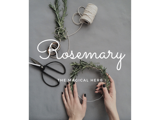 Rosemary - The magical herb