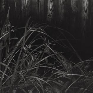Nostomania - Çalılık / Nostomania - Undergrowth - 2014 - 170x70 Acrylic on canvas - 2014