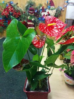 Plantes intèrieure4.jpg