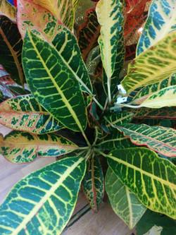 Plantes intèrieure1.jpg