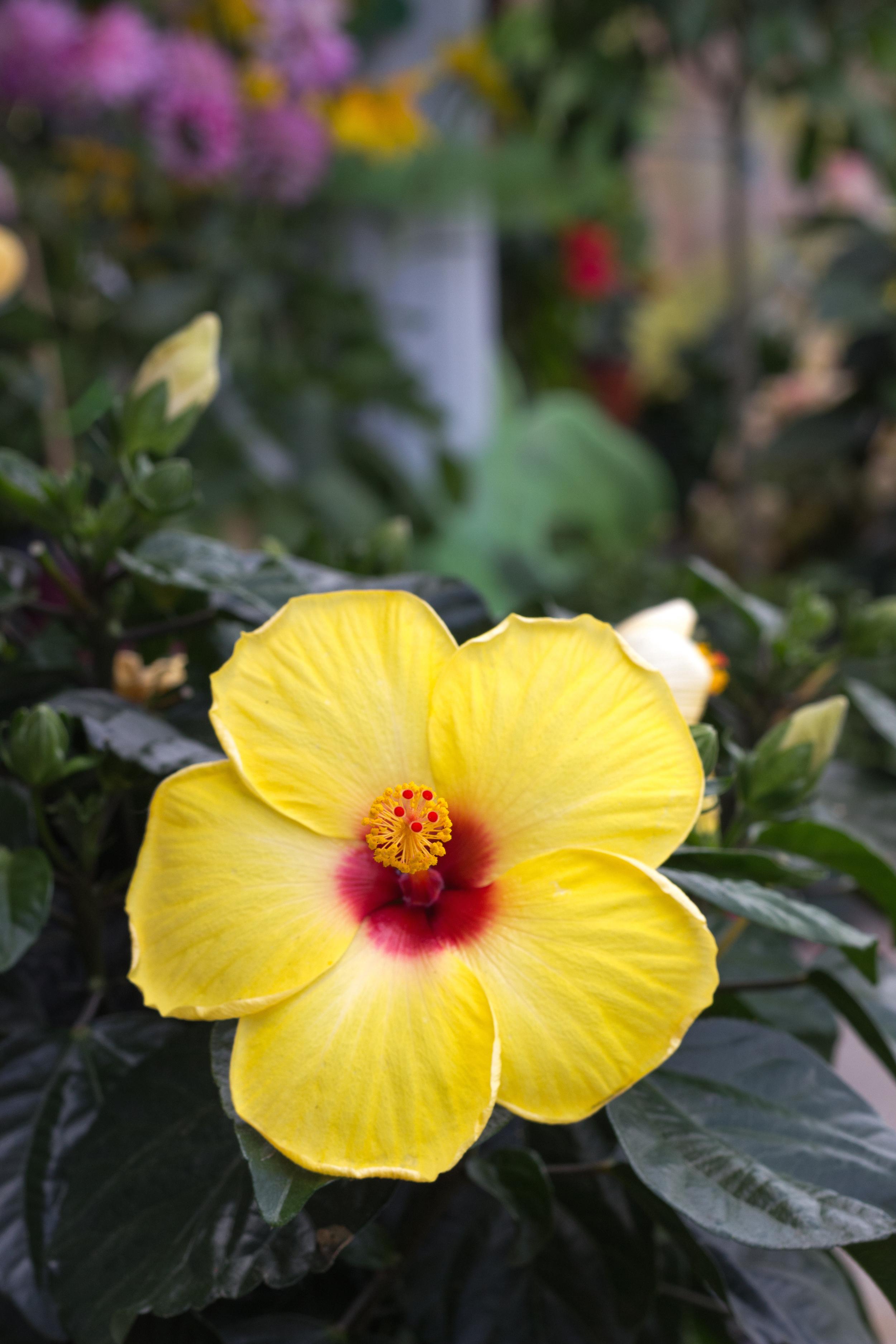 Centre de jardinage 440-34-1.jpg