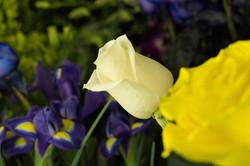 Centre de jardinage 440-36-1.jpg
