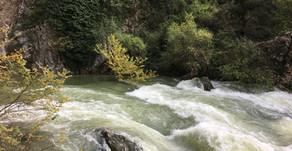 La Sorgue en crue, magnifique et tumultueuse à sa source à Fontaine de Vaucluse