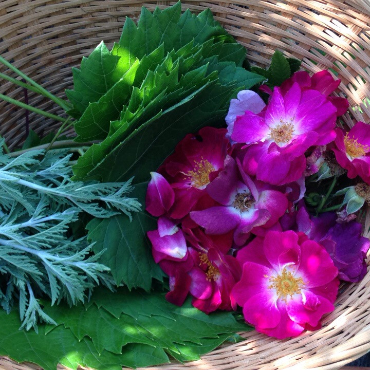 Nourishing Medicinal Perennial Plants-  A Hands on Workshop for the Changing Seasons