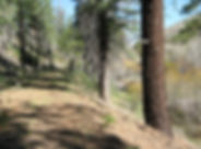 LB trail.jpg