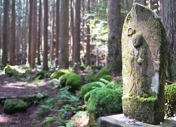 Kumano Kodo trail.jpg