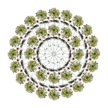White Flower (II), 2019