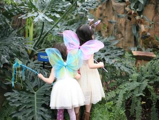 Walking Among The Butterflies