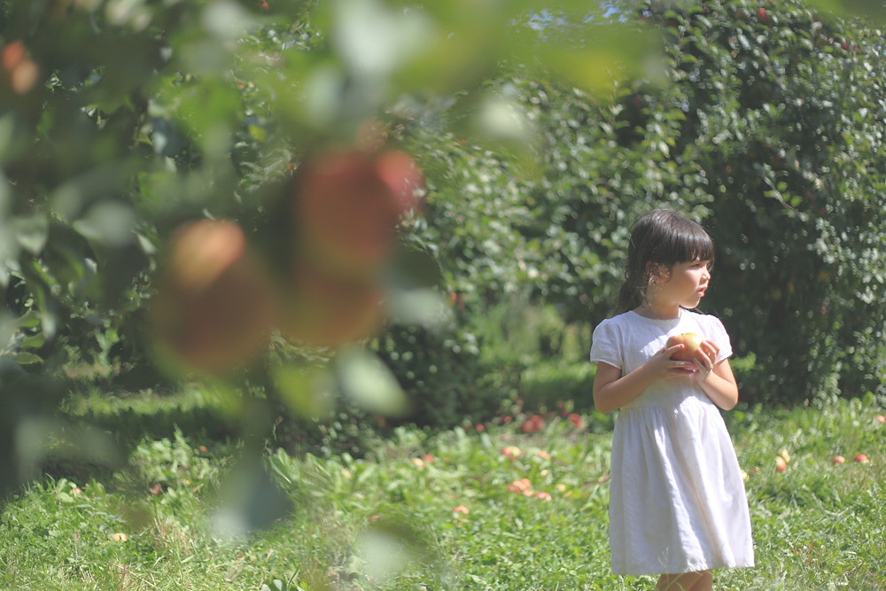 Apple Picking | Southwest Michigan Kids