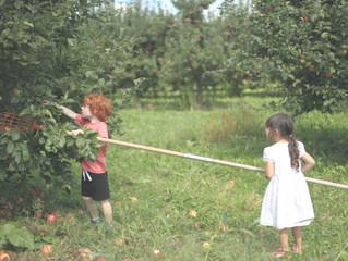 How Do You Like Them Apples? A Local U-Pick Guide
