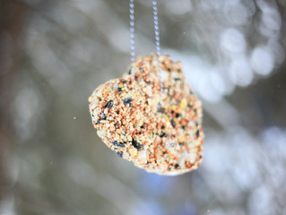 Easy Peasy Winter Bird Feeder