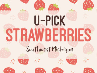 Local Guide To U-Pick Strawberries