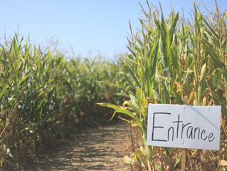 Find Your Way To These A-Maizing Corn Mazes & Pumpkin Patches