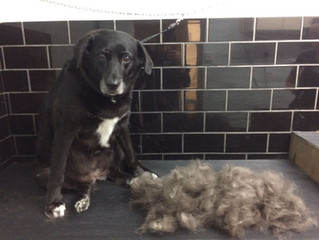 Grooming benefits for short haired breeds...