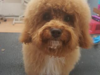 Look it's adorable Alfie again