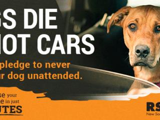 Dogs die in hot cars!